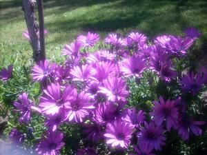 purple flowers may 2013